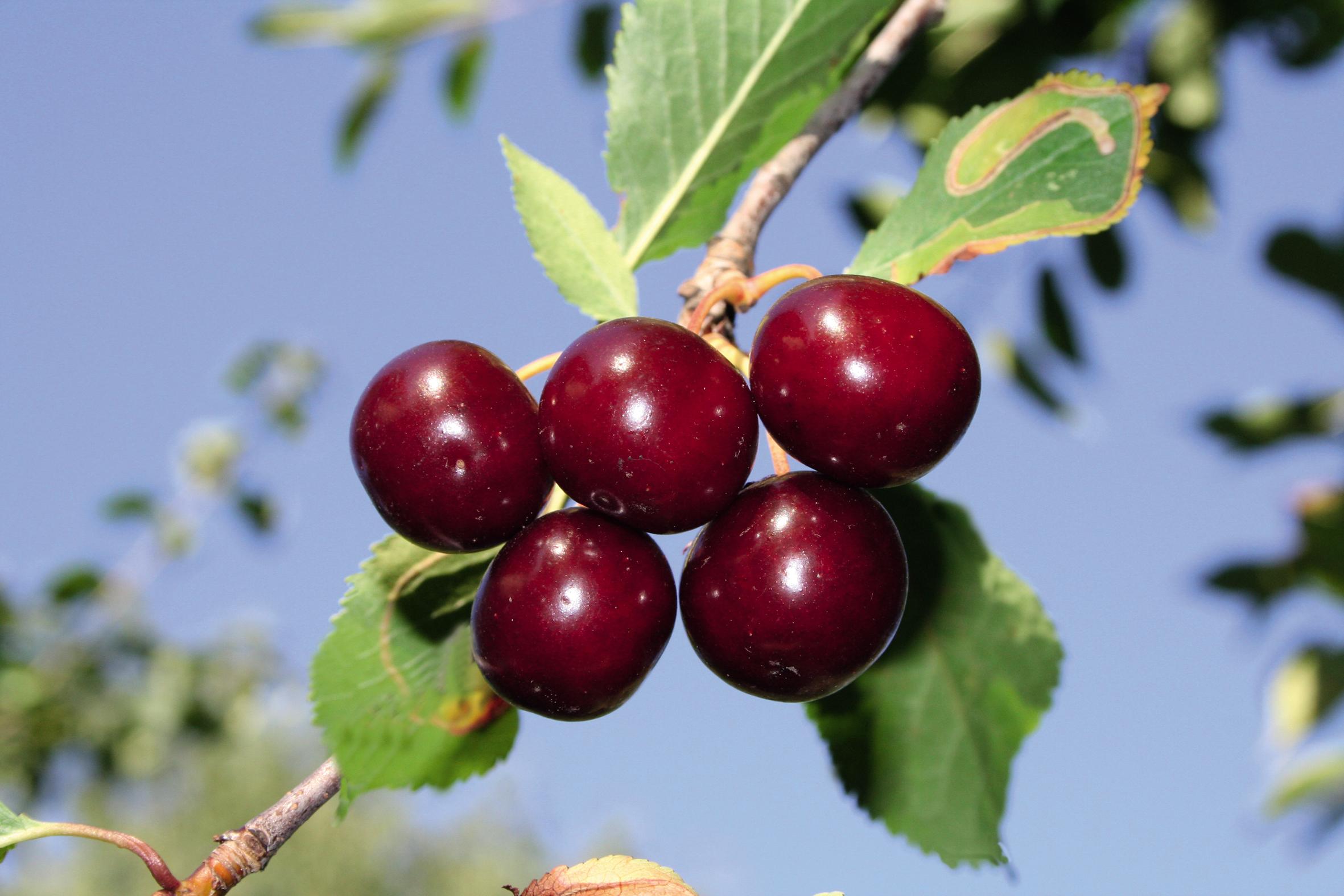 Rhöner Fruchtgenuss